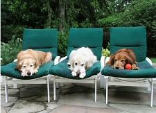 kutya, nyár, hőség