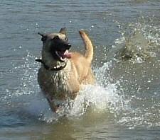 hőség, kutya, nyár