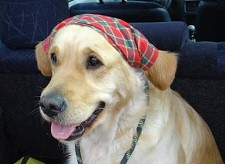kutya, autó, hőguta