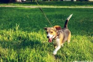 Napi két sétáltatásra kötelezhetik a kutyatartókat Németországban