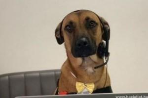Ezt a kóbor kutyát nem csak befogadták, de munkát is adtak neki
