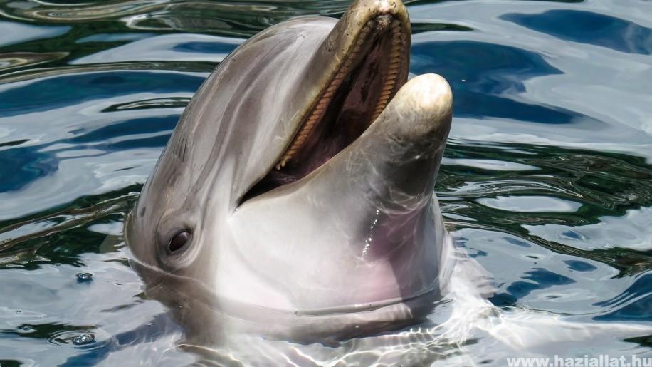 Olajszennyezés miatt pusztultak el a delfinek Mauritius partjainál