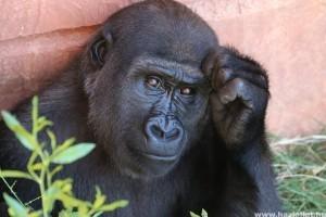 A természet segélykiáltása: több száz emlősfaj hallhat ki néhány évtizeden belül