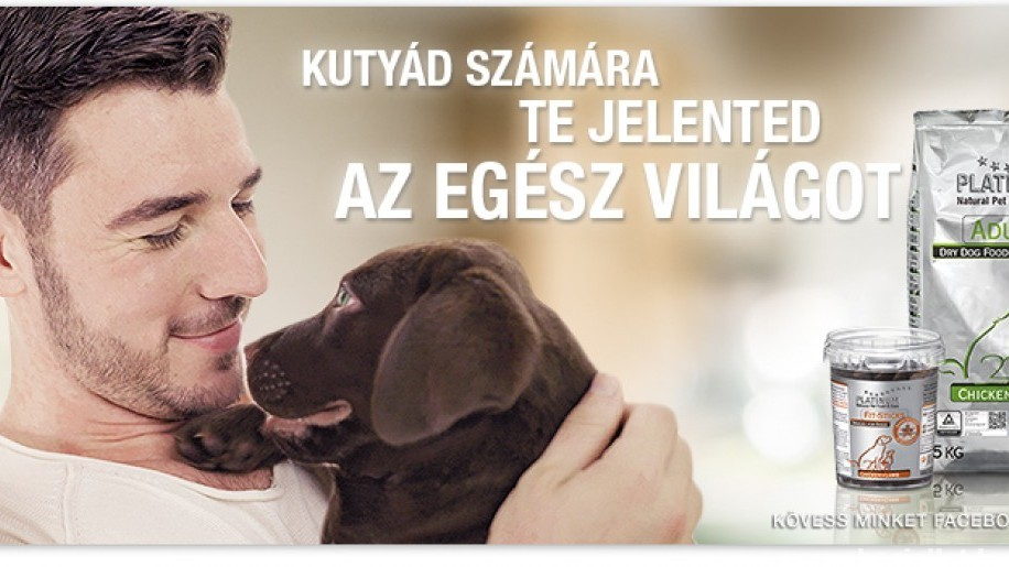 Valami, amit soha nem szabad elfelejtened, ha a kutya egészséges táplálásáról van szó! (x)