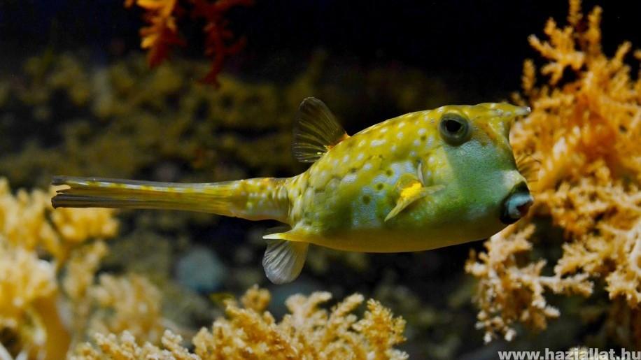 Oroszország vizeiben 300 új halfajt fedeztek fel