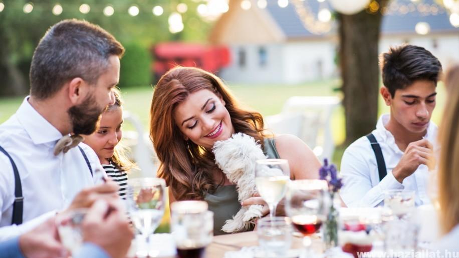 3+1 tipp az állatian jó, állati esküvőkhöz! (x)