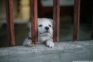 Magyar kutató dolgozta ki a világ első állatkínzás-ellenes büntetőjogi indexét