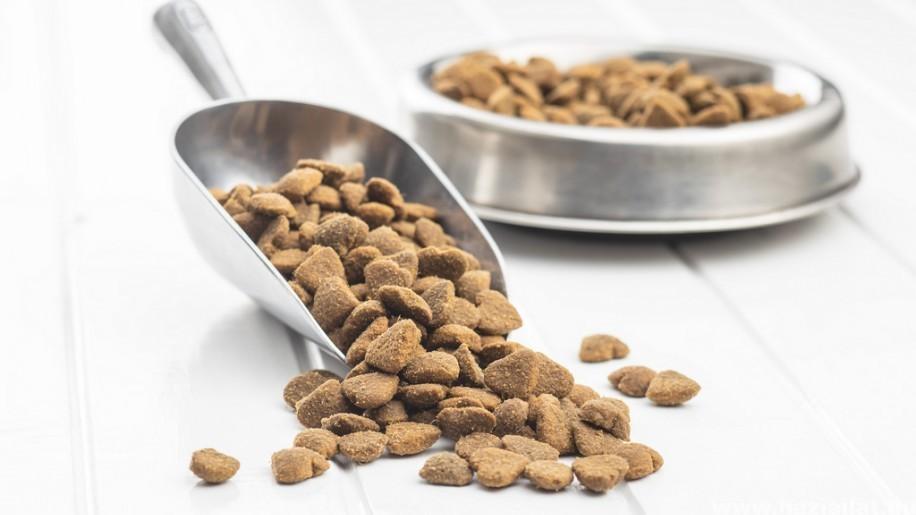 Az állati kutyatáp, macskaeledel meghozhatja nemcsak az étvágyat, hanem az egészséget is! (x)