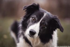 Így változik a kutyák személyisége az életük folyamán