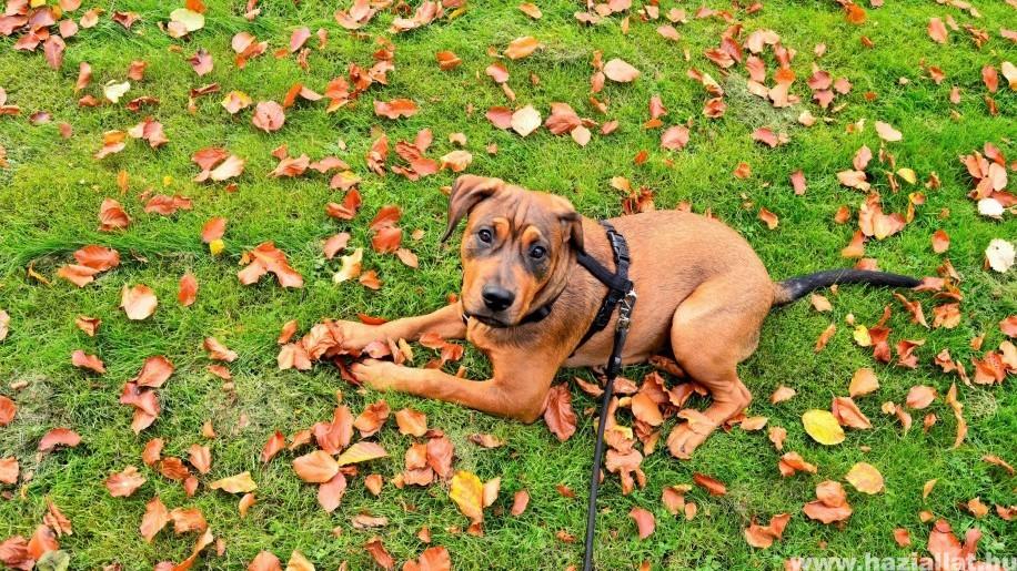 Menhelyről lopott kutyát egy 17 éves lány