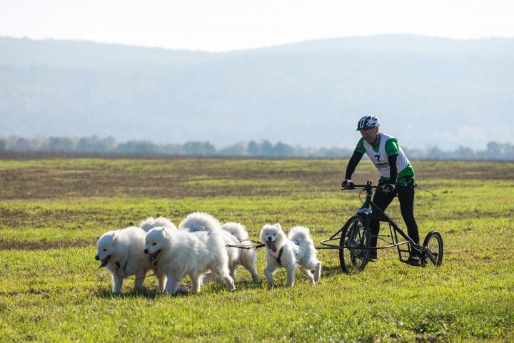 kutya_sport_bikejoring