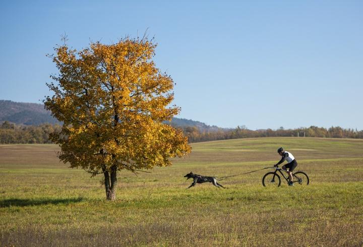 kutyas_sport_bicikli