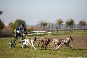 11. Medve-kupa: Kutyafogathajtó-verseny Pátyon