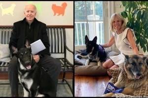 Örökbefogadott kutyák lesznek a Fehér Ház új örzői
