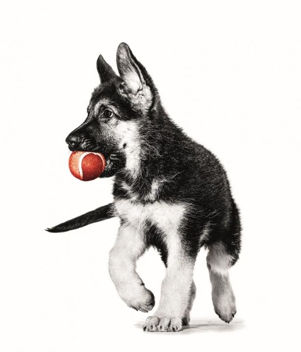 kölyök, kutya, táp, fekhely, ,gondozás