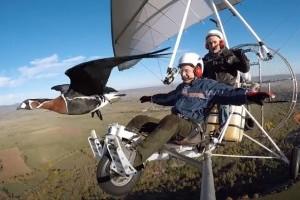 Varázslatos: ez a férfi 23 éve segít a vándormadaraknak, és együtt repül velük - videó
