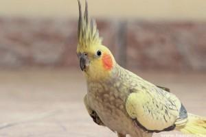 Ez a kis papagáj lehet a világ legokosabb madara - videó!
