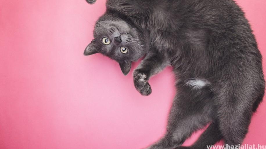 Vicces videók macskákról: a bársonytalpúak humorosabbak, mint gondolnád! (x)
