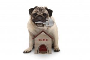 A legtrendibb kutyaházak 2021-ben (x)