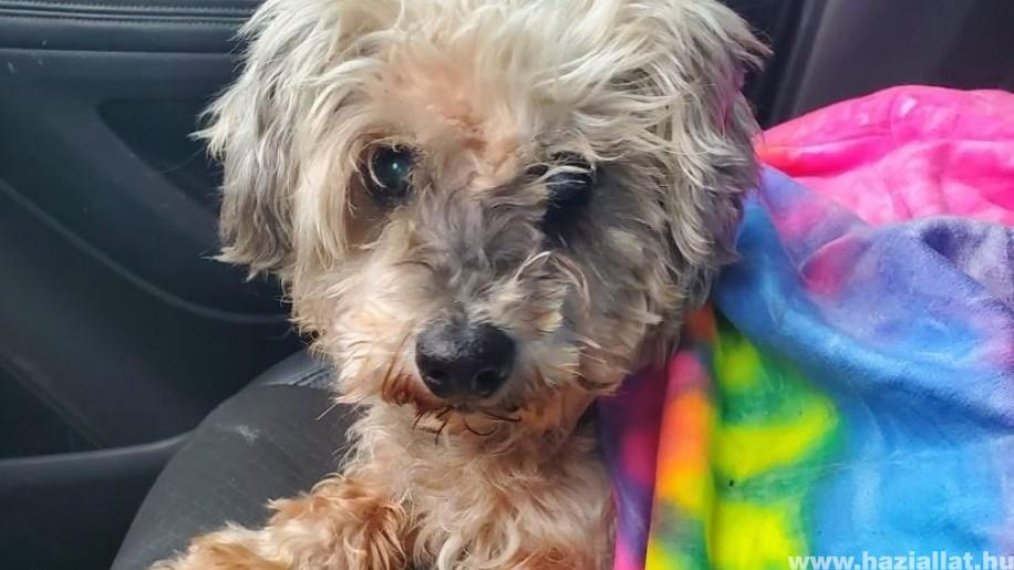 Hazakerült egy 3 éve elveszett kutya! 2017 óta kóborolt