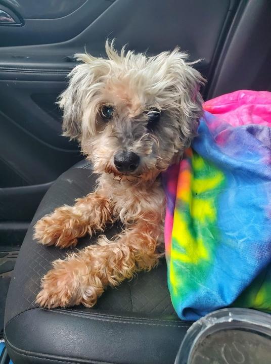 Maddie 3 évig kóborolt Fotó: The Forgotten Pet Advocates/Facebook