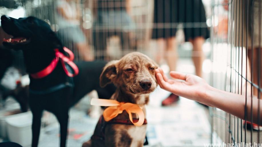 Örökbefogadás 2021-ben: ezekre figyelj, mielőtt kutyát vállalsz