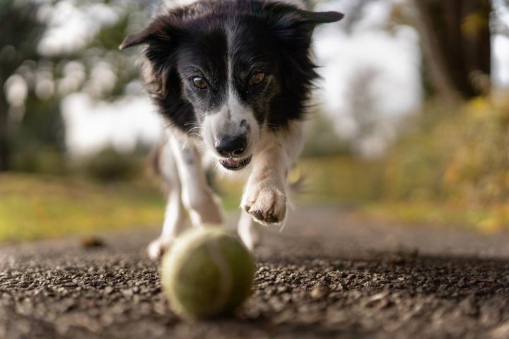 Játssz minden nap a kutyáddal!