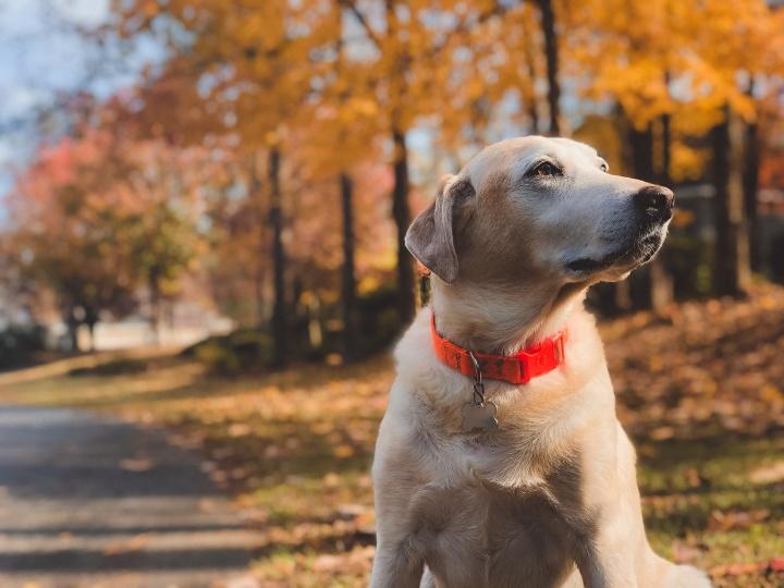 A kutyáknak nincs TB-jük, neked kell kifizetned az orvost (is)!