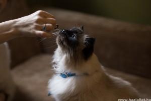 Étvágytalan a macskád? Így veheted rá az evésre