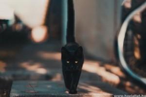 Remeg a macska farka? Így kommunikál a cicánk a farkával