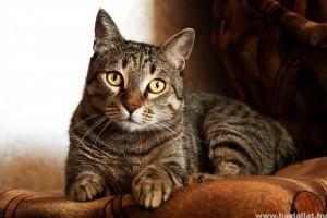 Javítanál a cicád étrendjén? Segítünk! (x)
