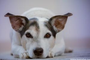 Koronavírus: háziállatokra is veszélyes a brit variáns!