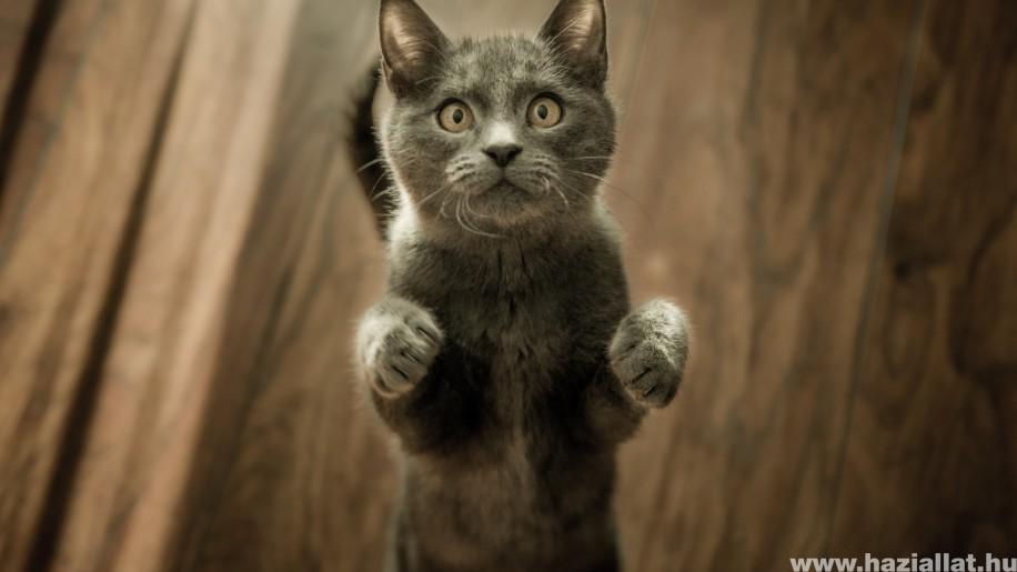 Mitől jó egy macskatáp? 5 dolog, amit nézz meg a csomagoláson
