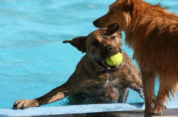 kutya, kutyajáték, kutyás sport