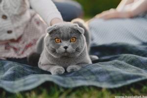 Veszettség és toxoplazmózis: macskáról emberre terjedő betegségek