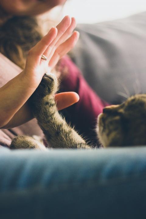 macska, cica, macskabetegség, veszettség