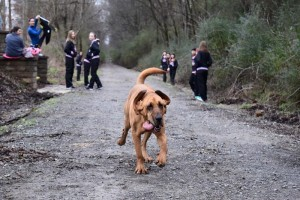 Ez a kutya lefutotta a félmaraton, pedig csak pisilni engedték ki