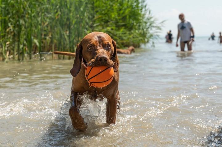 kutya, strand park, sport
