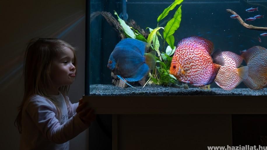 Akvárium halak összeválogatása lépésről lépésre (x)