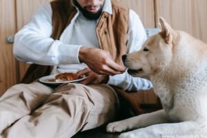 A kutya, macska túletetése állatkínzás - így büntetik az osztrákok