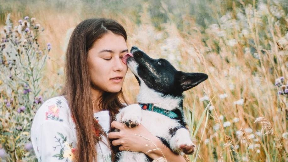 Kutyapuszi: miért nyalogatnak a kutyák?