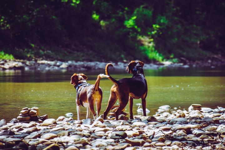 kutya, kutyastrand, fürdetés, víz