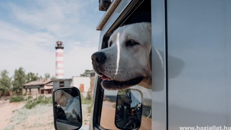 A hőguta kezelése kutyáknál - 5 tipp, ami életet menthet