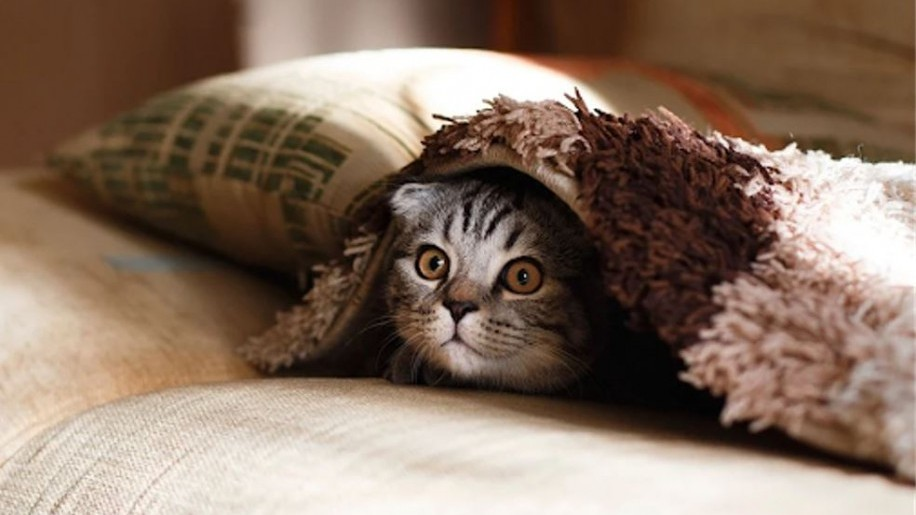 Hogyan viselik macskáink a kedvenc parfümjeinket? (x)