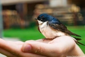 Ezért látni kevesebb madarat mostanában