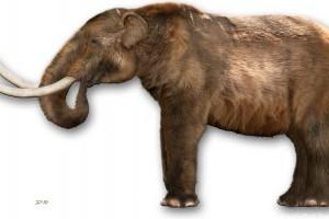 Egy genetikai vállalat a gyapjas mamutot akarja életre kelteni