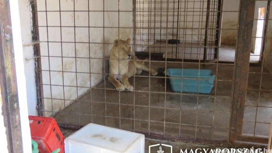 Illegális állatkertet zártak be Érden