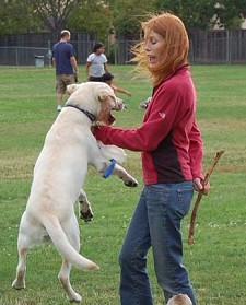 kutya-felugrik
