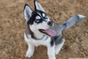 Ugrál a kutyád? Segítünk leszoktatni a puszilkodásról!