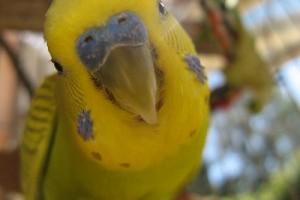 Gyurrrika okos madár, vazze!